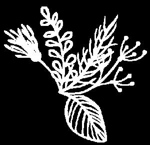 hierbasImagen Destilerias Sinc